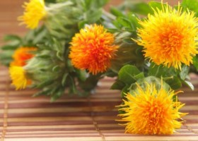 Uso diário do óleo de cártamo auxilia no emagrecimento e promove mais saúde