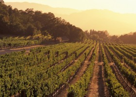 Região vinícola da Califórnia
