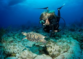 Ilhas Cayman: conheça esse paraíso dos esportes aquáticos no Caribe