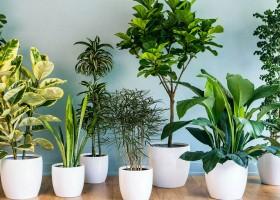 O poder das plantas na harmonização de ambientes