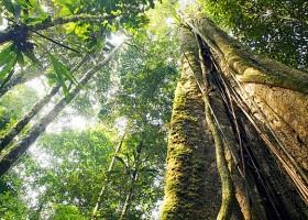 Floresta Amazônica é referência e inspiração para o mundo da moda