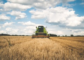 Safra de soja tem queda no Brasil