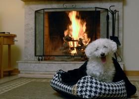 Resorts Pet Friendly: Uma oportunidade de não deixar seu animalzinho para trás
