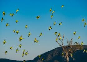 """""""Documenta Pantanal"""" registra a beleza e diversidade da região"""