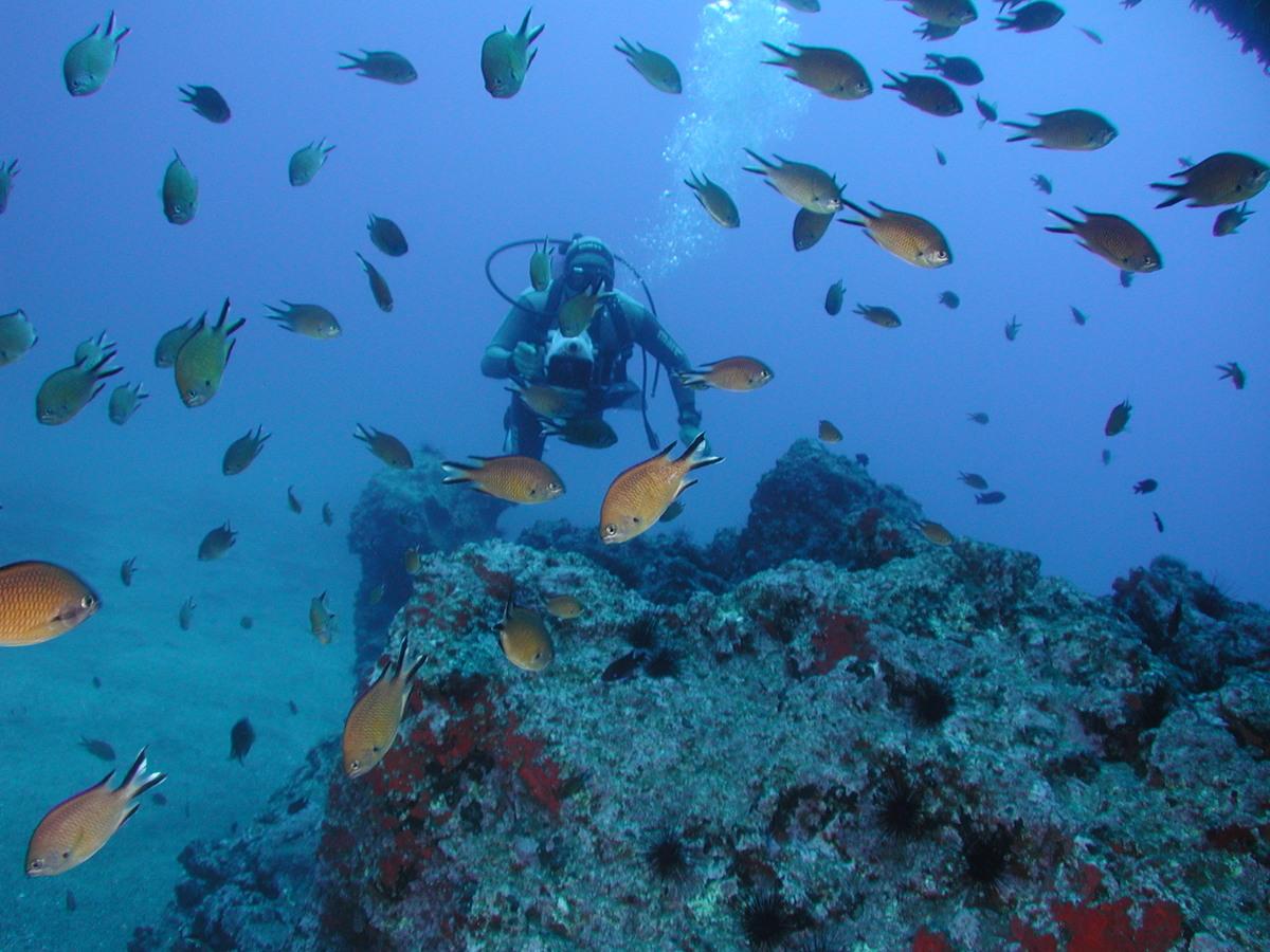 mergulho ilha da madeira